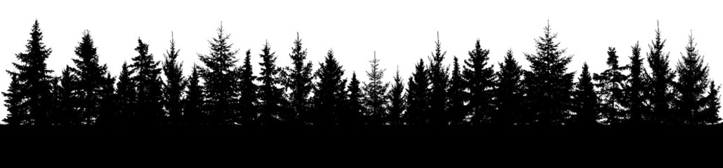 Forest of spruce trees silhouette. Coniferous spruce panorama. Horizon