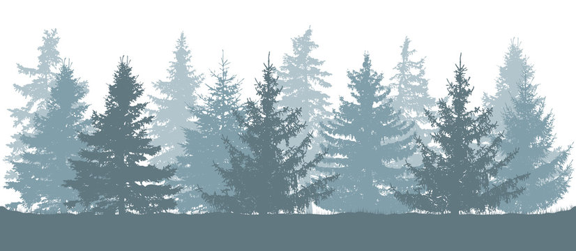 Winter forest, silhouette of spruces. Vector illustration.