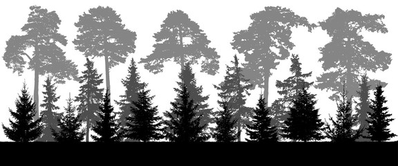 Silhouette of pine and coniferous forest landscape, panorama. Vector illustration