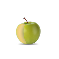 realistic green apple without  slice isolated on white background. vector illustrations
