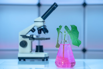 Green plant in laboratory chemical flask and microscope