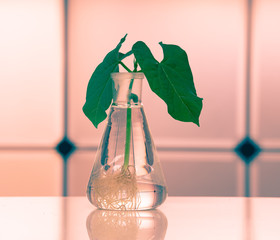 Green plant in laboratory chemical flask
