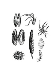 Ink graphic, hand drawn illustration. Can be used as background for web pages, invitation design, greeting cards, prints, patterns, wrapping paper, textile design, stickers, tattoo, element design.
