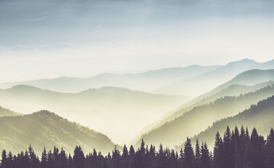 Tuinposter Heuvel Majestic landscape of summer mountains. A view of the misty slopes of the mountains in the distance. Morning misty coniferous forest hills in fog and rays of sunlight.Travel background.