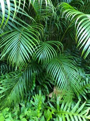 Close up of green palm leaves