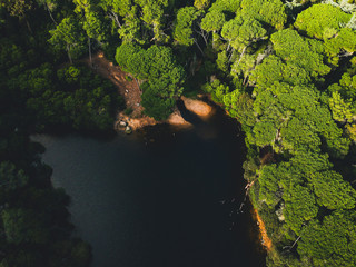 Aerial top view from a lake surrounded by trees