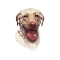Portrait of Labrador Retriever isolated on white background. Guide and gun dog, assistant to people. Animal art collection: Dogs. Realistic Hand Painted Pet Illustration. Good for pet shop, T-shirt