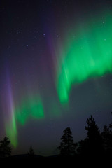 Aurora Borealis above northern taiga forest