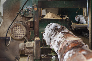 Wood processing. Cutting logs on the boards. In the winter process a tree.