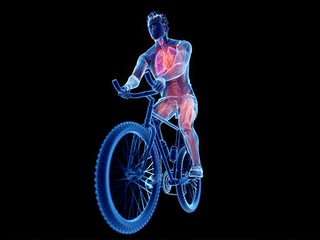Illustration of a cyclist's anatomy