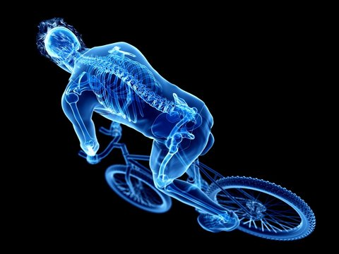 Illustration of a cyclist's skeleton