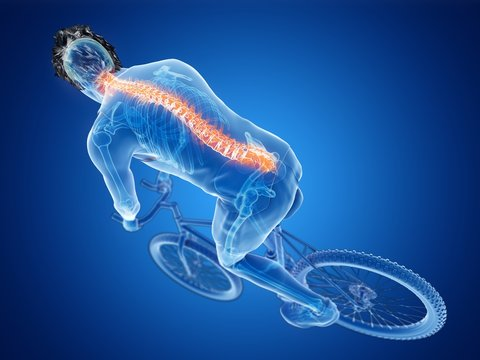 Illustration of a cyclist's spine