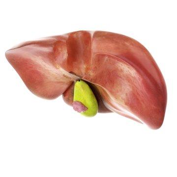 Illustration of gallbladder cancer