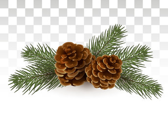 Cones in spruce branches. Christmas composition. A small festive decor in a realistic style. Winter Holiday xmas mockup . Vector Illustration. Eps 10.