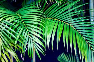 PLANTAS VERDES EN EL CARIBE