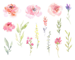 Watercolor isolated floral elements, flowers and leaves