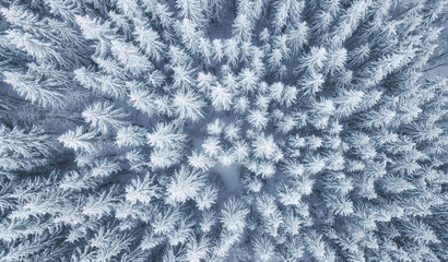 Photo sur Toile Foret Aerial view at the winter forest. Pine trees as a background. Winter landscape from air. Natural forest background. Forest background from drone
