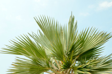 close up of  green palm leaf