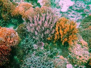 Tuinposter Onder water Coral reef in Komodo National Park, Flores Sea, Nusa Tenggara, Indonesia.