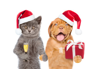 Funny puppy and kitten in red christmas hats with gift box and glass of champagne. isolated on white background