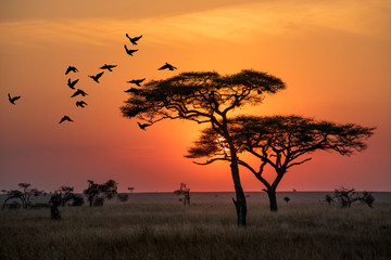 Photo sur cadre textile Afrique Amazing sunrise in Serengeti natural park of Tanzania filling good in the morning