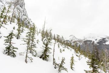 Trees on Alpine Mountainside