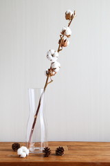 Cotton plant flowers branch in glass vase on wooden table