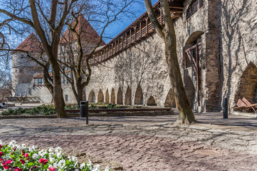 Fototapete - Fortification wall in the old center of Tallinn