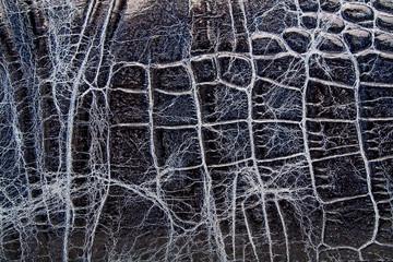 Wall Mural - Crocodile skin texture