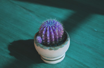 A purple cactus in pot in the middle of green light in the night. There is copy space for text.