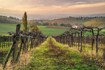 Cultivated fields and vineyards in the southwest of Bologna: Protected Geographical Indication area of typical wine named