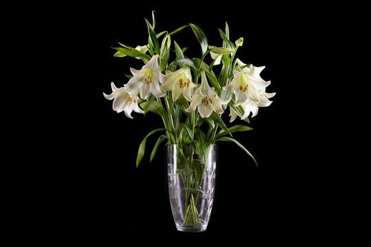 white lillies in vase on black background