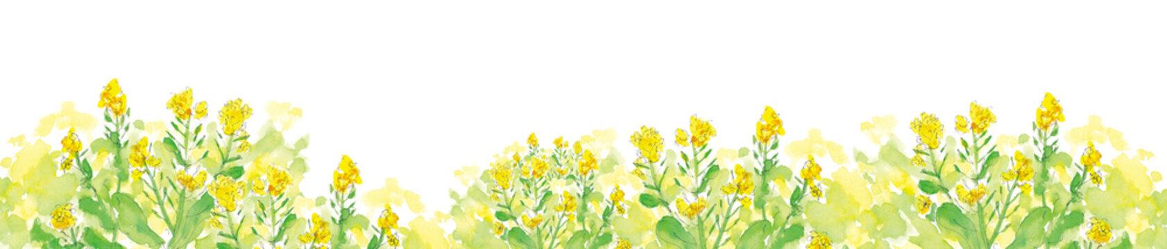 菜の花の咲く道、水彩イラスト