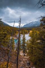 Along Bow River, Banff National Park, Alberta, Canada