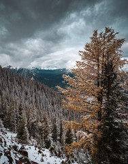 Hiking to the summit of Sulphur Mountain in Banff National Park, Alberta, Canada