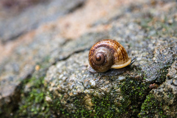 Snail on a wet rock
