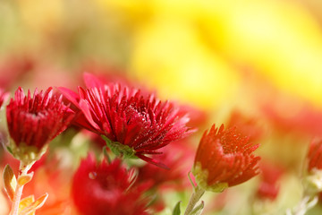 decorative flowers with bokeh blurred background / bright summer photo