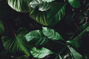 Dark greens background