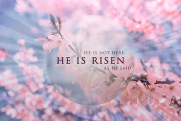 Christian Easter background, religious card. Jesus Christ resurrection concept. He is risen text on a background with pink, bright flowers, delicate spring blossom on a soft, blue sky with rays