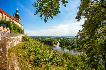 Vineyard in front of the castle Mělník Bohemia Czech Republic