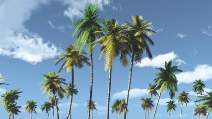 Palm trees against the sky with clouds, tropical view,