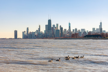 Chicago Skyline viewed from the Lakeview neighborhood with geese