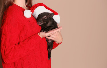 Woman holding mini pig with Santa hat on color background, closeup. Space for text