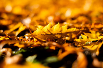Leaf of gold