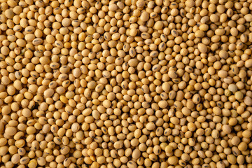 Raw soybeans background