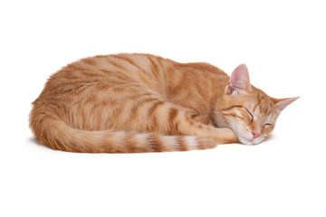 Sleeping red cat on white background
