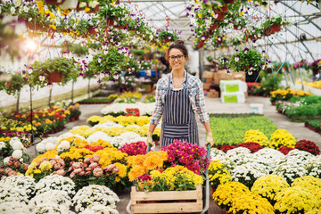 Happy female florist pushing wheelbarrow full of potted flowers in hot house. Colorful potted flowers around her.