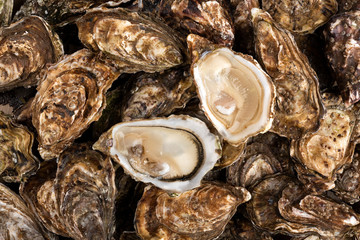 Close up fresh catch of several raw oysters at retail display of fisherman market, close up, high angle view