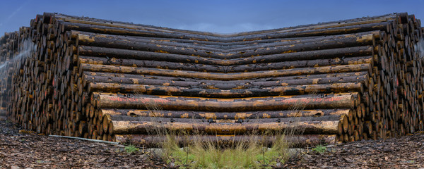 Stacked wood on a wood storage yard