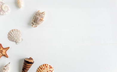 Wooden background white with shells. Frame with seashells on a white background. Sea background. Travel background